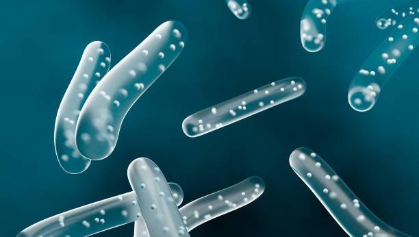 Lactobacillus Bulgaricus Bacteria